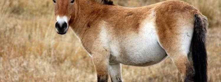 Описание саврасой масти лошадей