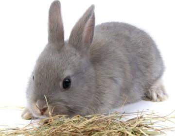 Трава молочай — можно ли давать её кроликам?