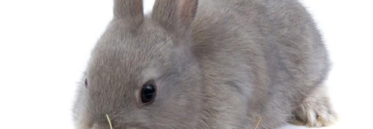 Трава молочай – можно ли давать её кроликам?