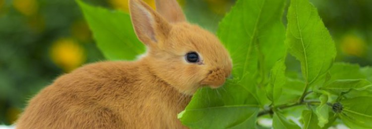Какие ветки деревьев можно давать кроликам
