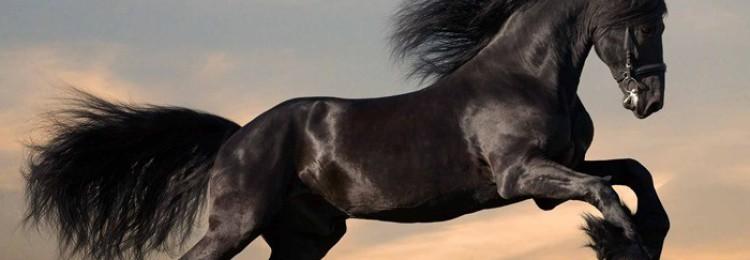 Как называется дикая лошадь?