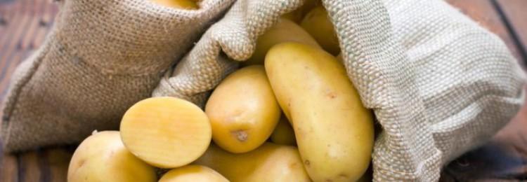 Кормление свиней сырым картофелем: пищевая ценность корнеплода и польза для животного