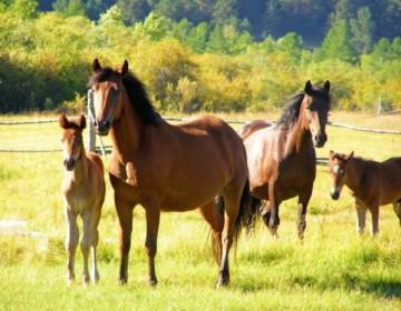 Жизнь лошадей: средняя продолжительность в домашних условиях