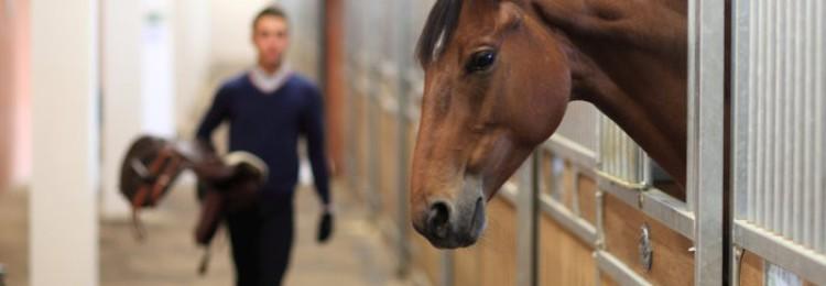 Как осуществляется уход за лошадьми?
