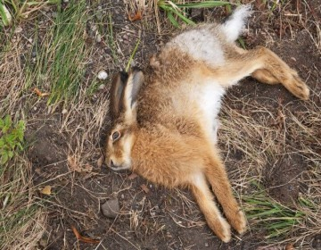 От чего умирают кролики?
