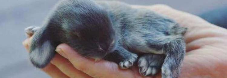 Через сколько дней крольчата открывают глаза?