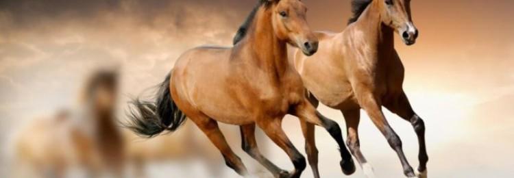Карабахская порода лошадей