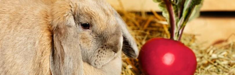 Какими овощами и фруктами можно кормить кроликов?