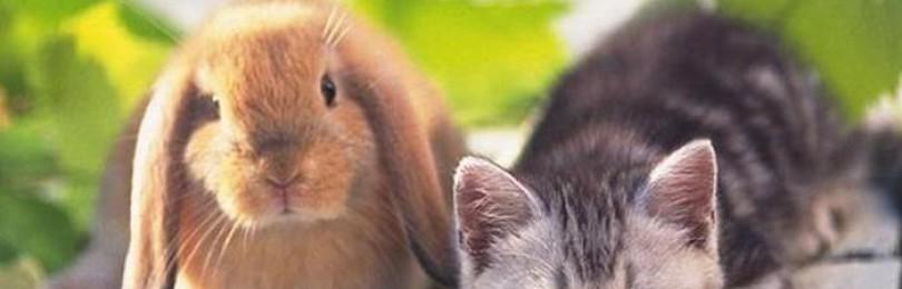 Как вывести блох у кролика?