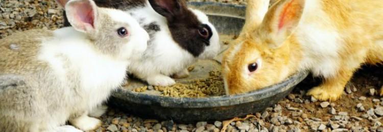 В каком возрасте отсаживают крольчат от крольчихи?