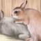 Почему крольчиха не хочет спариваться?