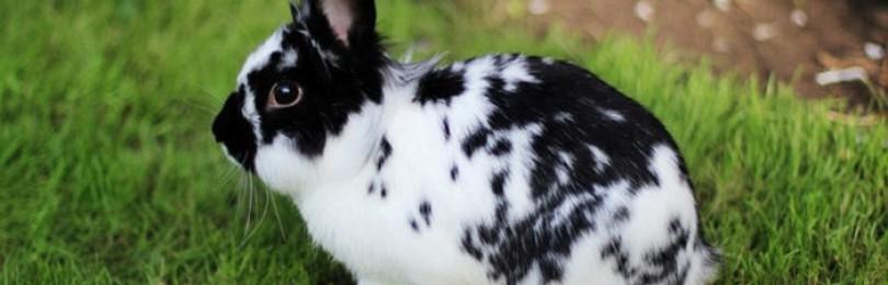 Кролик Бабочка