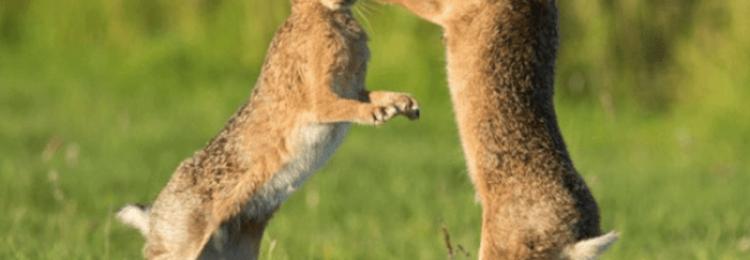Как определить пол кролика в разном возрасте?