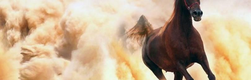 Какая самая быстрая лошадь в мире?
