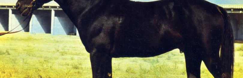 Карабаирская порода лошадей