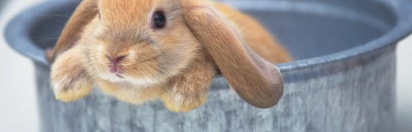 Как правильно купать кролика?