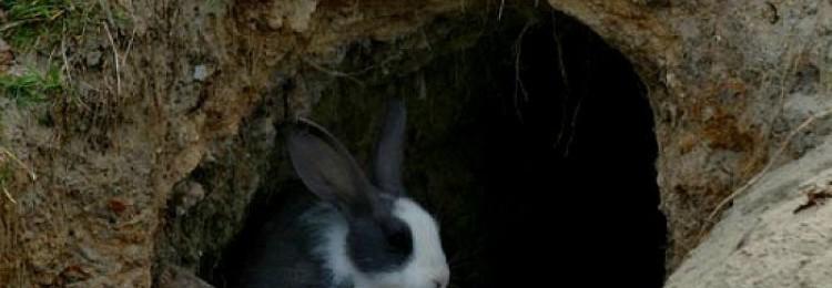 Содержание и разведение кроликов в яме