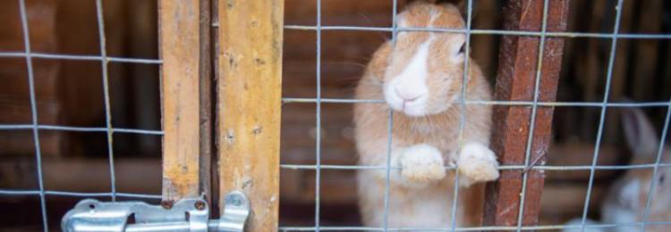 Клетки для откорма кроликов
