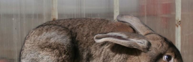 Чем обработать клетки кроликов после гибели или болезни?