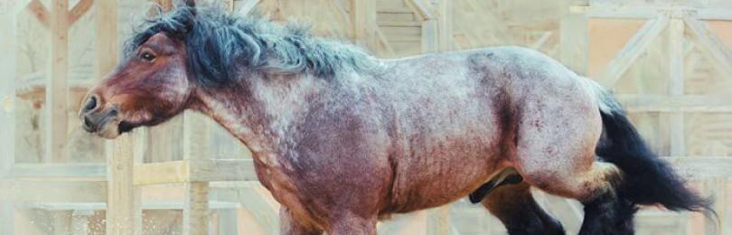 Порода лошадей брабансон