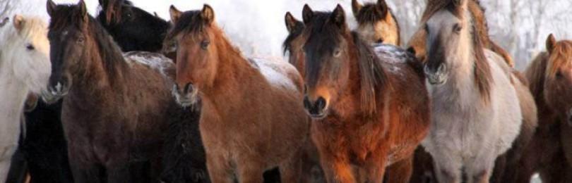 Породы лошадей в Башкирии