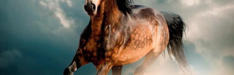 Самые лучшие лошади