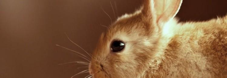 Как устроено зрение кроликов?