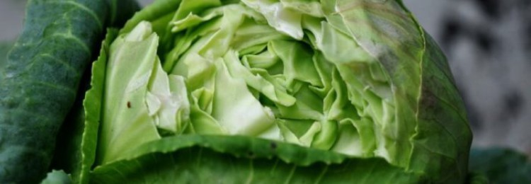 Почему лопаются кочаны капусты?