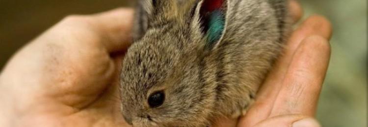 Приручаем домашнего кролика к рукам