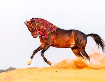Какая самая древняя порода лошадей?