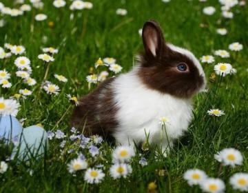 Что делать, если кролик чихает и как его лечить?