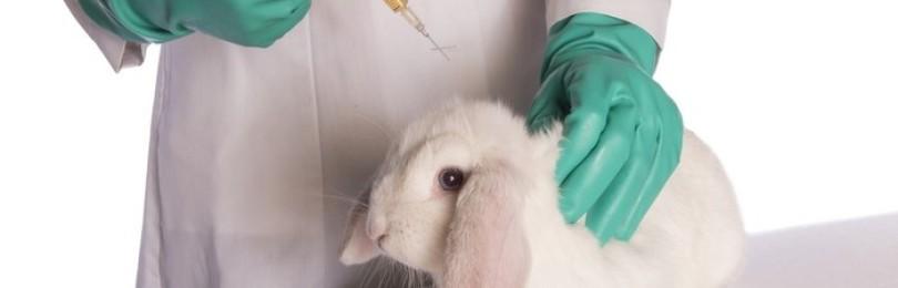 Вакцинация кроликов в домашних условиях для начинающих