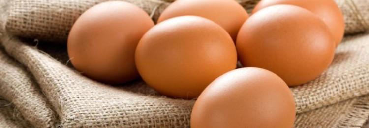 Самые яйценосные породы кур