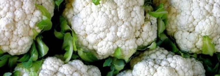 Разновидности цветной капусты