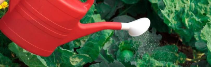 Как избавить капусту от вредителей нашатырным спиртом