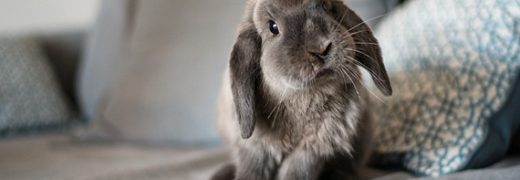 Ампролиум для кроликов
