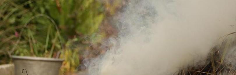 Рассада капусты и заморозки – что необходимо знать огороднику