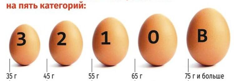 Сколько грамм в одном яйце: вес белка и желтка, масса без скорлупы