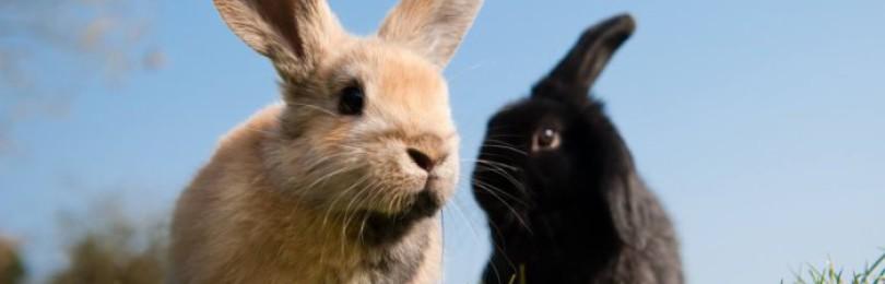 Кокцидиостатики для кроликов