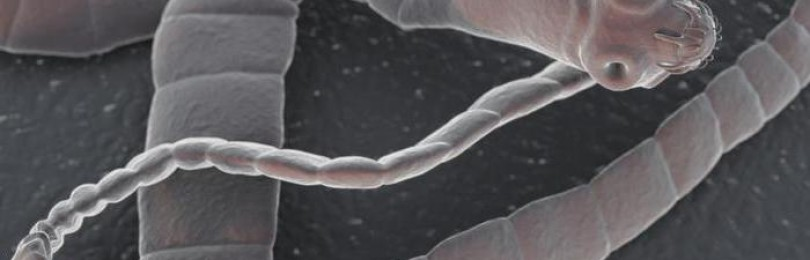 Что делать если завелись глисты у телят?