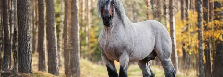 Самые сильные лошади