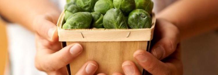 Правила выращивания брюссельской капусты в открытом грунте