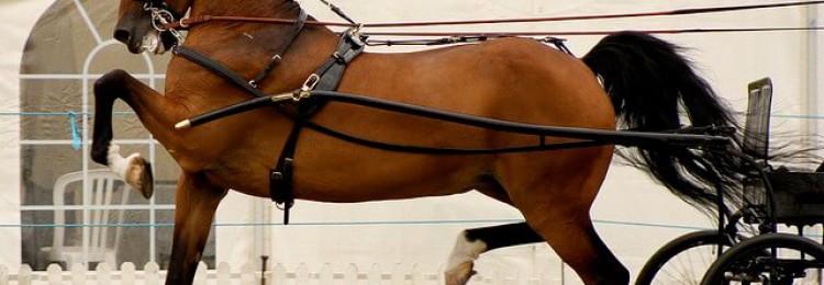 Английская порода упряжных лошадей