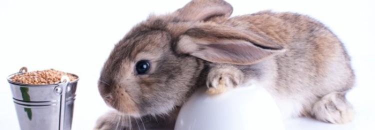 Ячмень кроликам: можно ли давать, как правильно кормить?