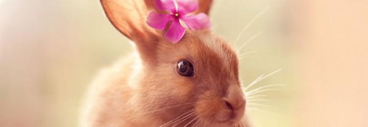 Звуки кролика