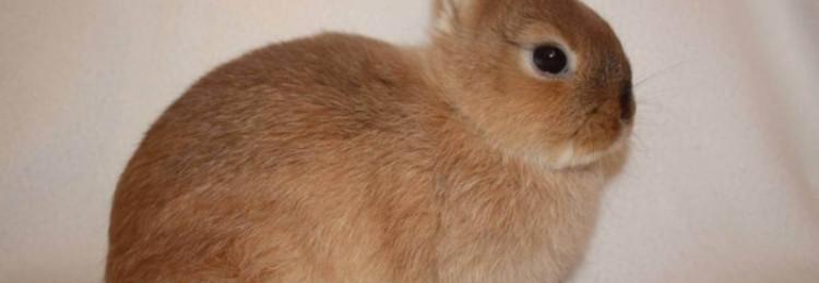 Как подстричь когти кролику в домашних условиях
