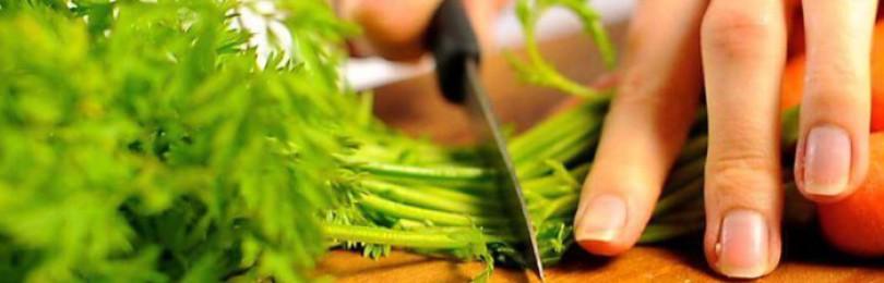 Ботва моркови кроликам: можно ли давать и как правильно кормить ею питомцев?