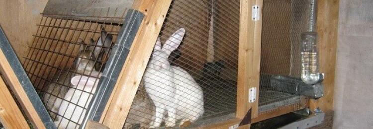 Сколько кроликов можно держать в одной клетке и как пошагово рассчитать крольчатник