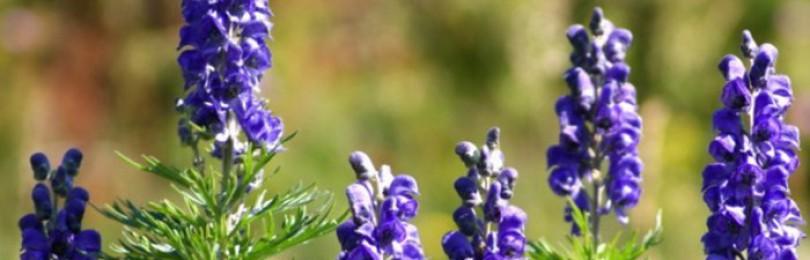 Ядовитые растения для кроликов