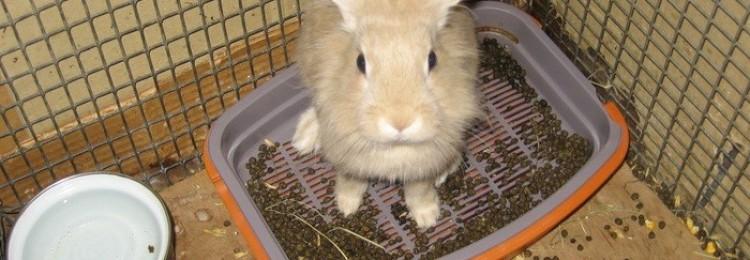 Что делать, если у кролика понос?